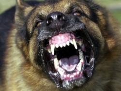 vicious-dog 250